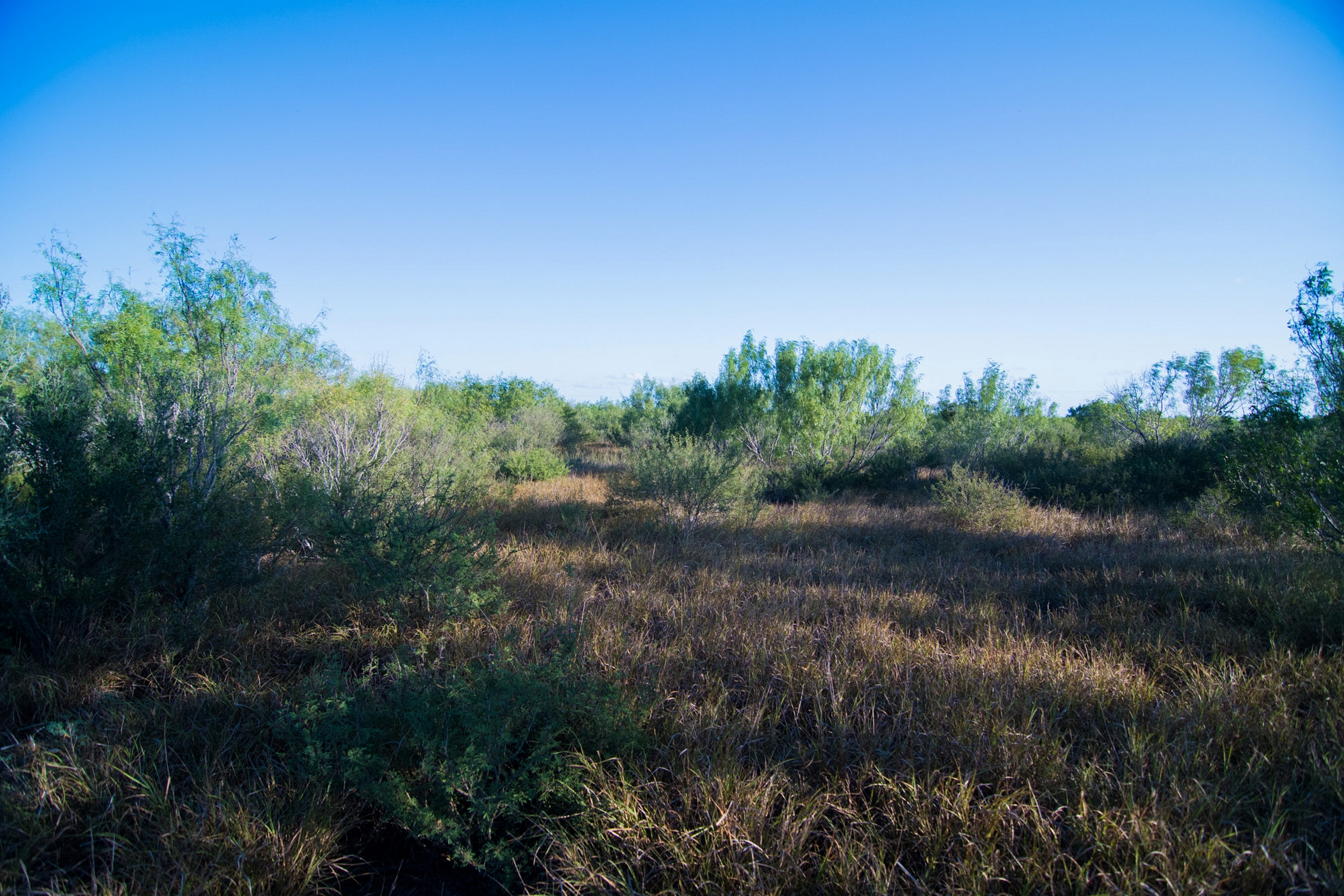 86 Acres Tilden Hunting Ranch | Dullnig Ranches
