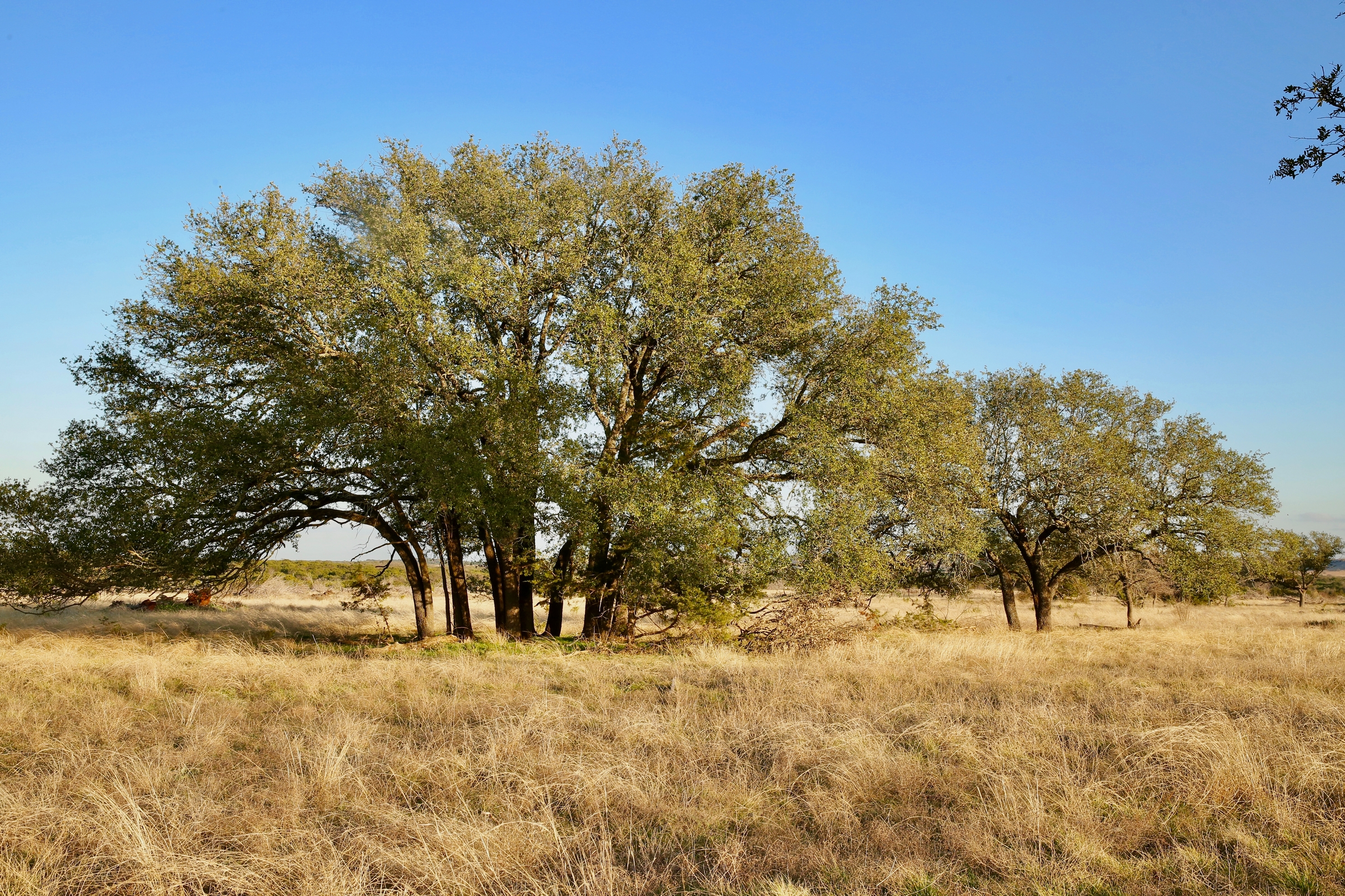 4,887 Acres Stone Ranch | Dullnig Ranches